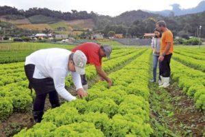 Trabalho rural: entre conquistas e desafios