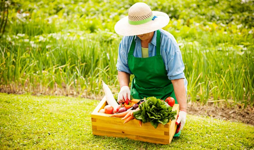 É possível acumular aposentadoria por idade rural e pensão por morte de trabalhador rural